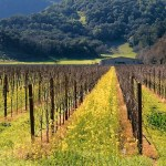 Napa Valley hotels account for a big portion of income received by communities here