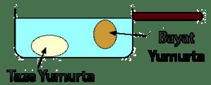 Bayat Yumurta Testi
