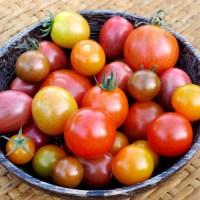 Co to są pomidory samokończące?