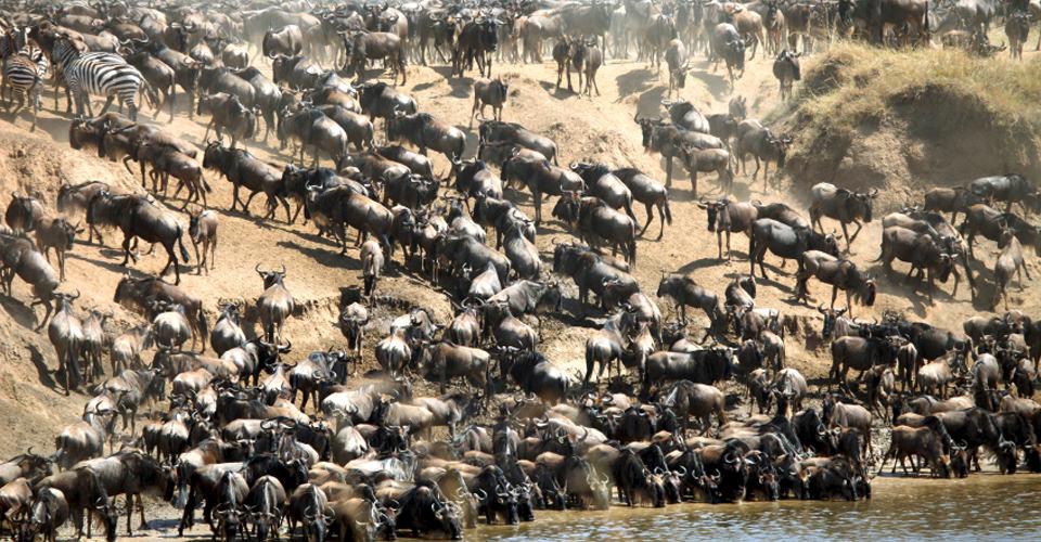 Animal Crossing Wild World Wallpaper Tanzania Migration Safari Africa Safaris Natural Habitat