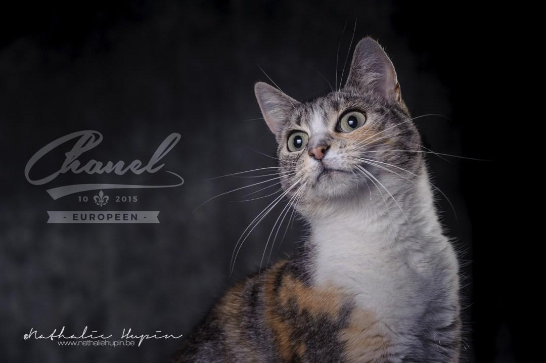 photographe animaux chat hainaut