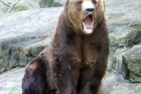 Tigers and lions and bears! Oh, my! Remaining assignments and new study materials online