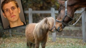 horse bestiality arrests mugshots