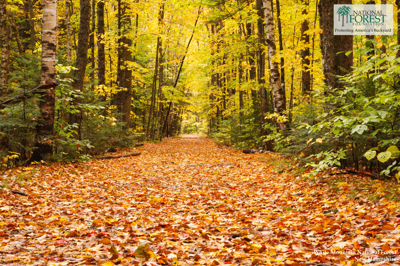 Fall Wallpaper Pintrest Desktop Backgrounds National Forest Foundation