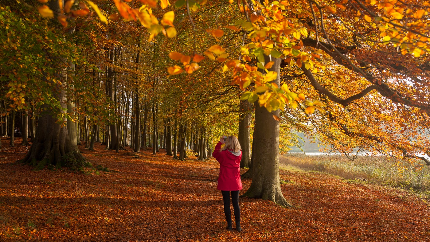 Girl Falling Through The Air Wallpaper Dazzling Displays Of Autumn Colour In Our Gardens And