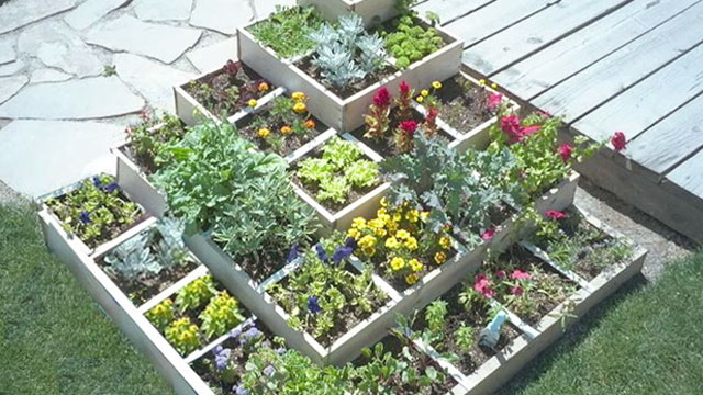 Square Foot Gardening | National Vanguard