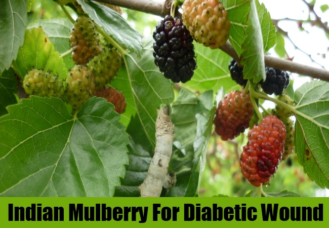 Indian Mulberry For Diabetic Wound