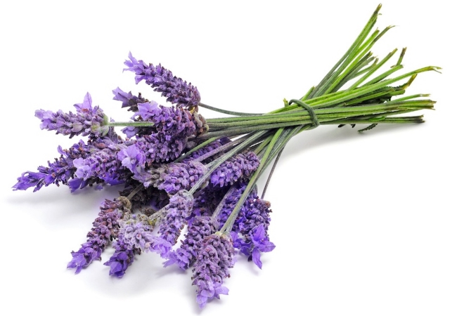 how to make lavender water with essential oil