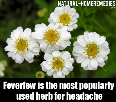 Feverfew for headaches