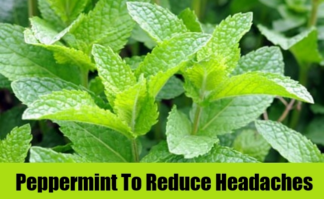 Peppermint To Reduce Headaches