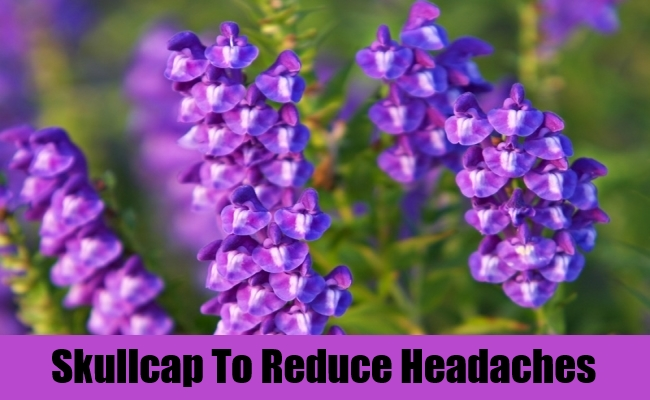 Skullcap To Reduce Headaches
