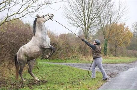 natural horsemanship ireland trainer
