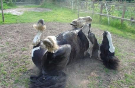 natural horsemanship ireland