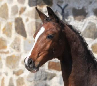 natural horsemanship ireland foals