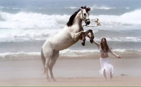 natural horsanship ireland problem solving