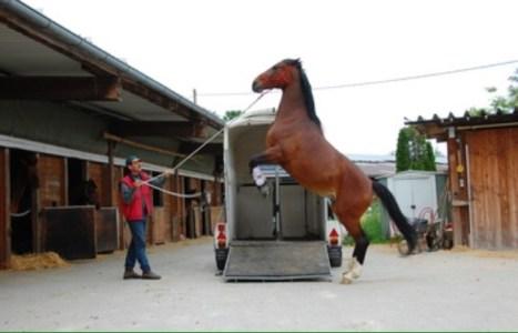 horse trailer loading problem