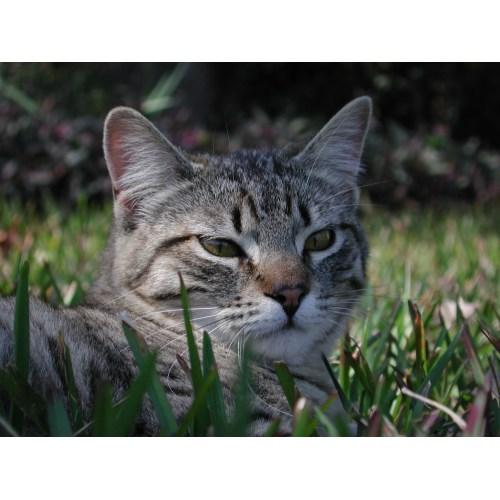 Medium Crop Of Ibs In Cats