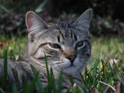Small Of Ibs In Cats