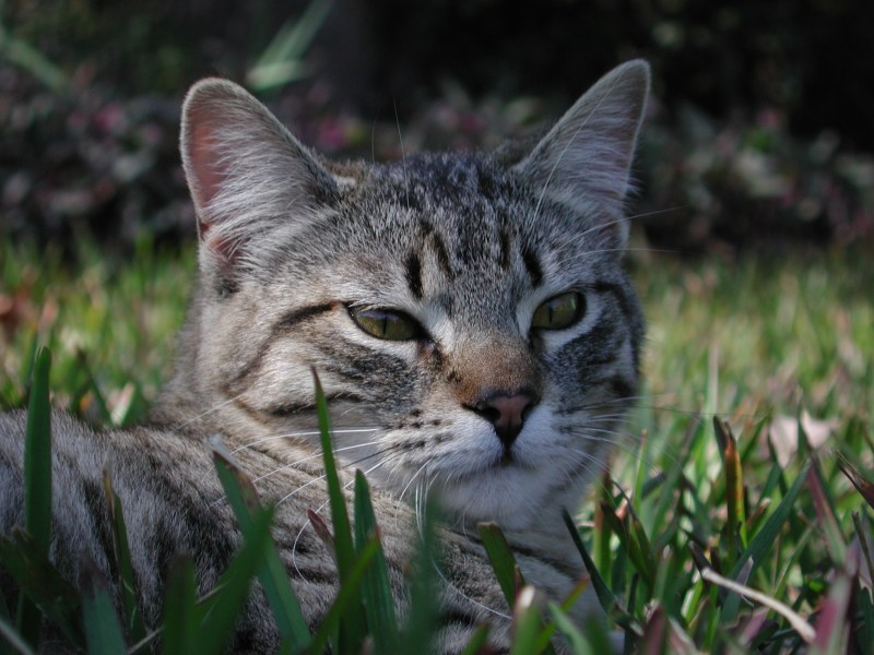 Large Of Ibs In Cats