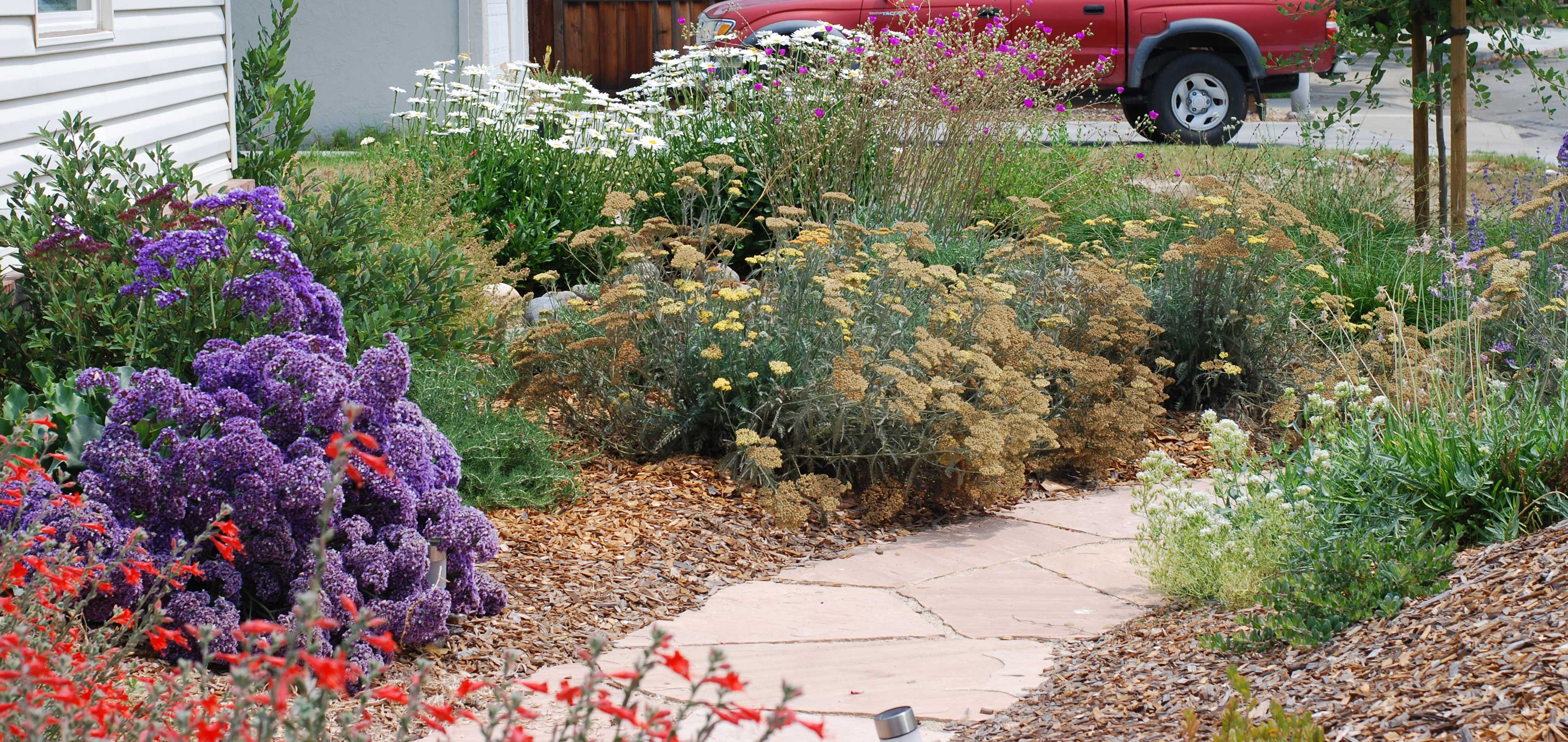 Natural front yards sustainable landscaping - Mediterranean garden plants colors and scents ...