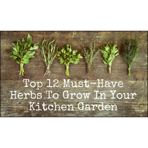 Medium Crop Of Herb Garden Idea