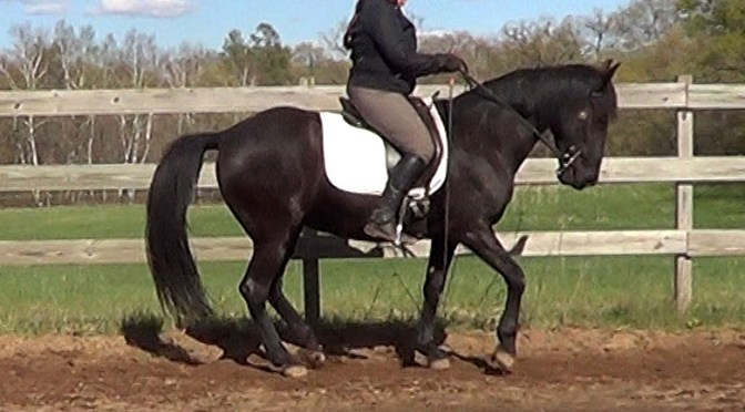 Can German and French dressage co exist