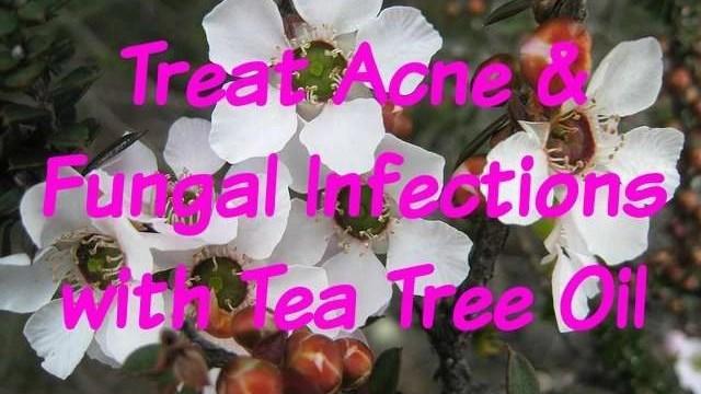 tea-tree-oil-for-skin-hair-beauty