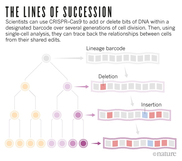 The trickiest family tree in biology  Nature News  Comment