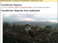 Osprey live video stream from the nest
