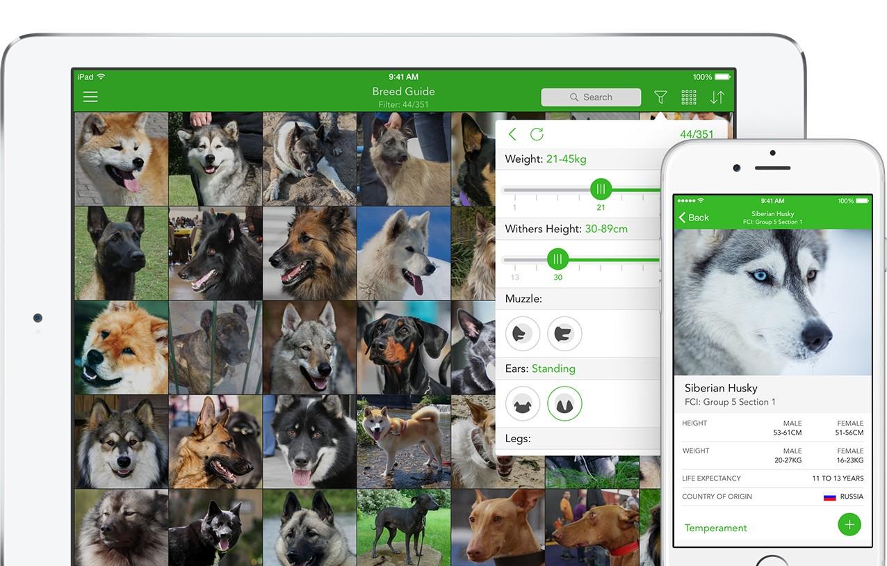 Fullsize Of Dog Breed Identification Quiz