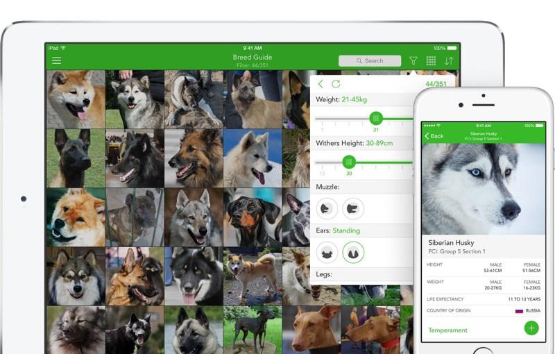Large Of Dog Breed Identification Quiz