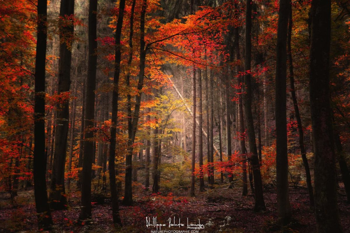 Beautiful Fall Paintings Wallpapers Effet Orton Naturephotographie