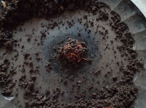 """Worms will """"ball"""" in the center, castings removed to the outside."""