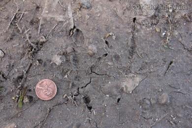 Chachalaca Tracks