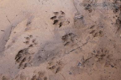 Mink Tracks