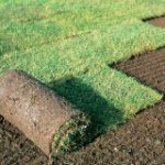 Färdig gräsmatta smårulle