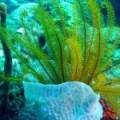 Algas Marinas: Fuente de Minerales y Vitaminas