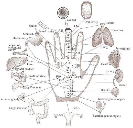 elke-vinger