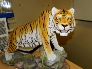 Tigre_mascote_NaPaOc_Amazonas