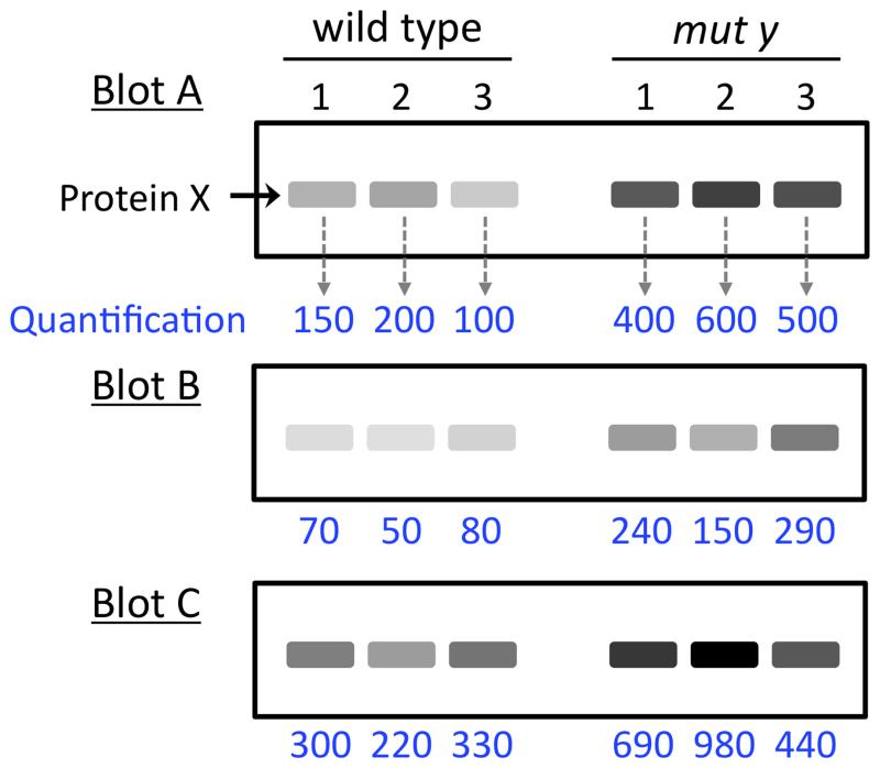 Figure 13, Representative western blot analysis - WormBook - NCBI