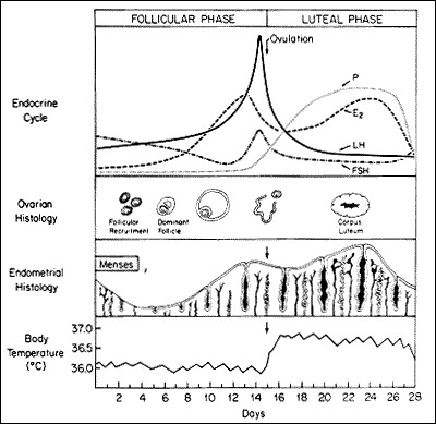 The Normal Menstrual Cycle and the Control of Ovulation - Endotext