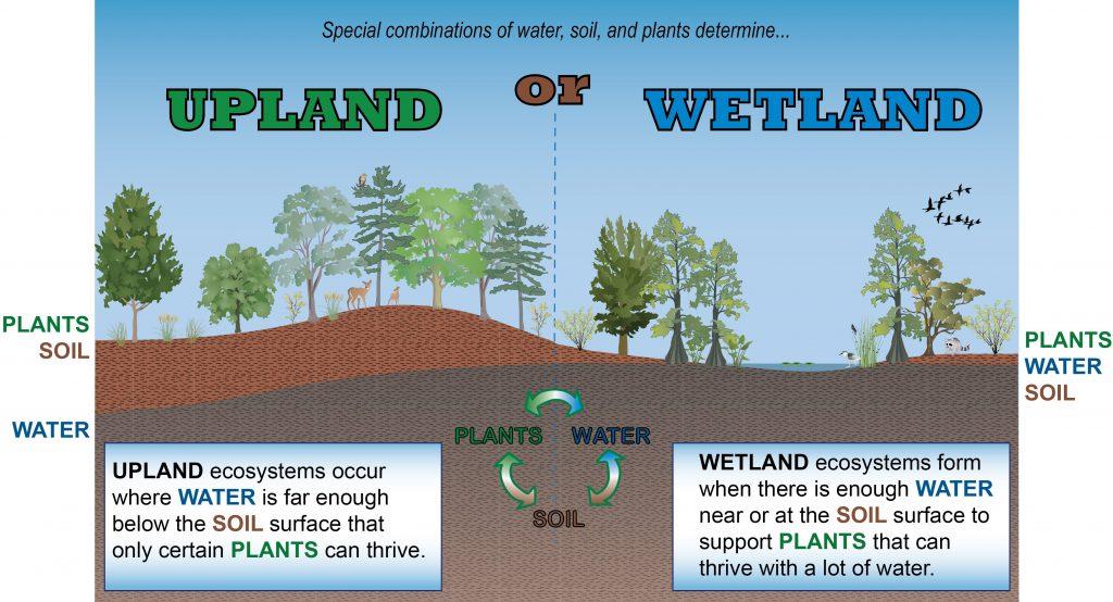 conceptual diagram Wetland vs upland KG-02  North Carolina Wetlands