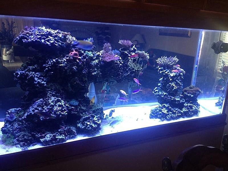 Aquarium Design, Aquarium Maintenance