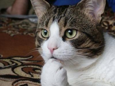 人に猫が必要な25の理由