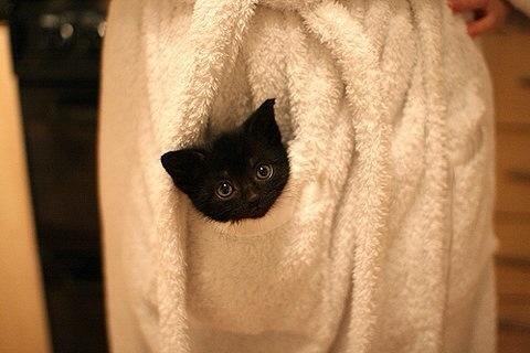 かわいすぎる黒猫
