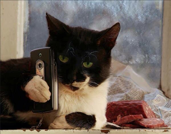 【猫画像】逆に撮ったろか