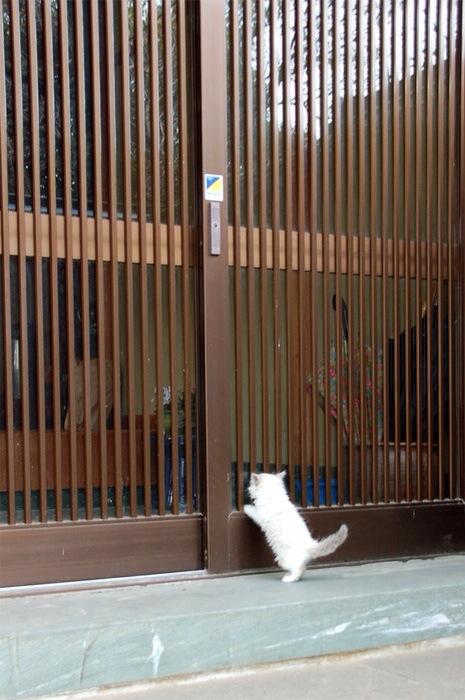 【猫画像】開けてくれ〜