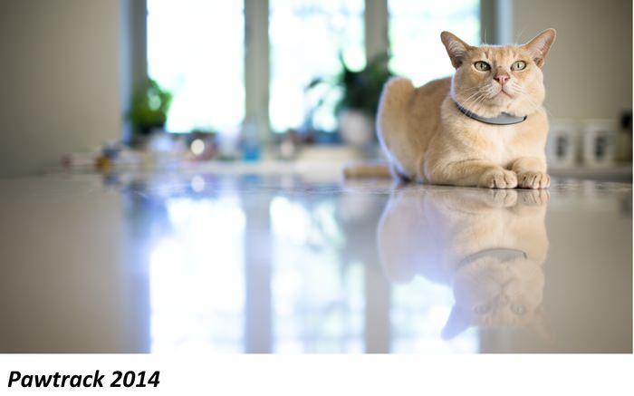 【猫ネタ】もう迷い猫にならない!スマート首輪 – PAWTRACK -