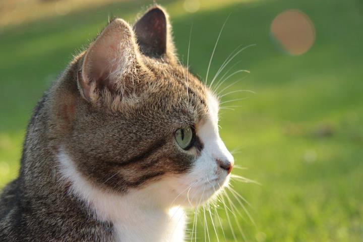 【猫GIF】ちょっ危ないって!ドジっ子の猫GIF 9選