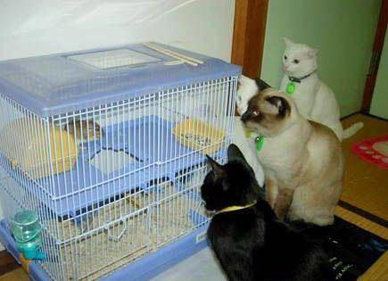 【猫画像】出待ち